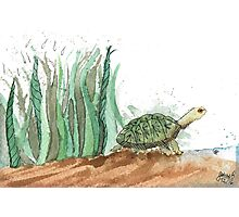 New Friend- Watercolor Turtle Illustration Photographic Print