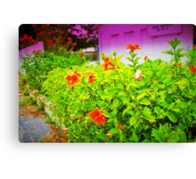 Urban garden Canvas Print