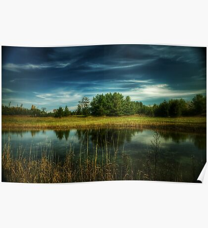Tree reflection pond Poster