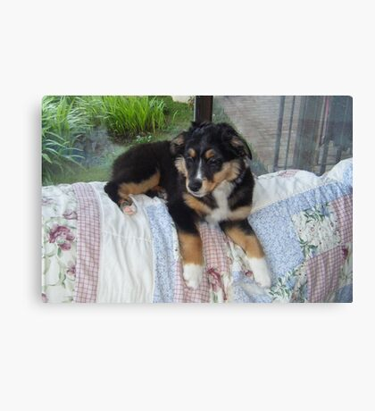 AS black tri puppy laying Canvas Print