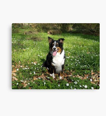 AS black tri sitting in field Canvas Print