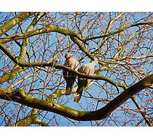 Love Doves Photographic Print