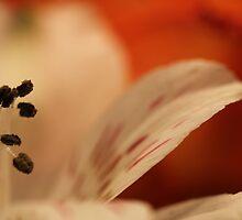 Iris on Orange by Jan Vinclair