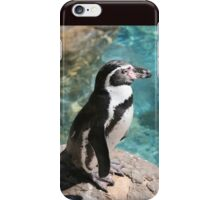 Humbolt penguin iPhone Case/Skin