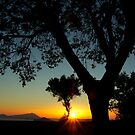 Sunset behind the trees ~ 2 by Rachel Veser