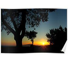 Sunset behind the trees ~ 1 Poster