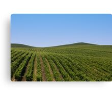 Rolling Vineyards Canvas Print