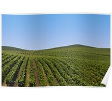 Rolling Vineyards Poster
