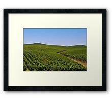 Vineyards Framed Print