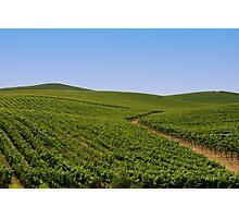Vineyards Photographic Print