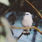 Bird is the word by Dagloos