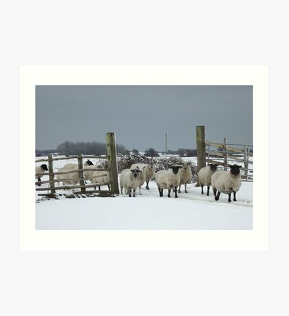 Sheep in a snowy gateway Art Print