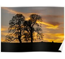 Two Oaks and Sunset Poster