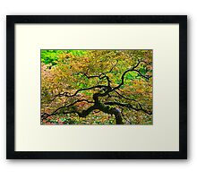 Uplifting Point-of View Framed Print