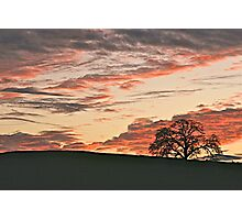 Lone Tree and Smokey Foothill Sunset Photographic Print