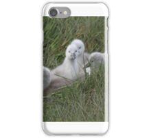 Cygnets iPhone Case/Skin