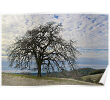 California Winter Landscape Poster