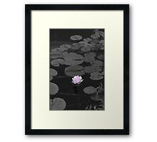 Just a Touch of Pink Framed Print