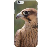 Falco peregrinus pelegrinoides iPhone Case/Skin