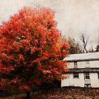 The beautiful tree by vigor