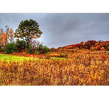 Fall Colors II Photographic Print