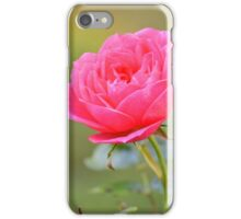 Macro photo of a pink rose in an English garden iPhone Case/Skin
