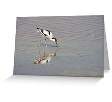 Recurvirostra avosetta Greeting Card