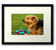 Playful Dog - Nature Photography Framed Print