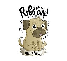Pugs are cute Photographic Print