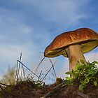 Bolete by relayer51