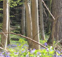 Bluebell Forest Sticker