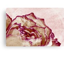 Dried Single Pink Fringed Rose - Macro  Canvas Print