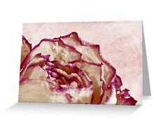 Dried Single Pink Fringed Rose - Macro  Greeting Card