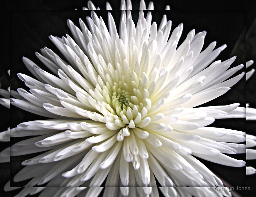 Explosion of White  by Kathryn Jones
