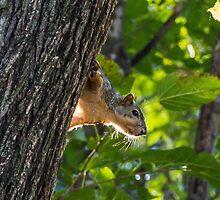 Peeking out by Dwellsphoto
