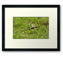 Dragon in flight Framed Print