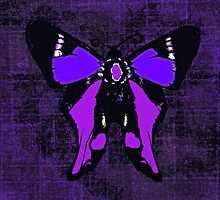 Winter Butterfly by Saundra Myles