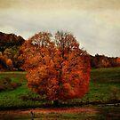 The Orange Tree by vigor