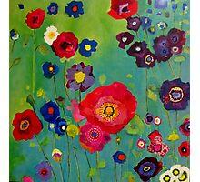 Bloom field - Poppy Photographic Print