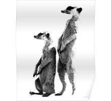 Clever Meerkat. Digital Wildlife Engraving Image Poster