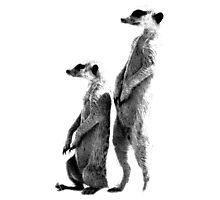 Clever Meerkat. Digital Wildlife Engraving Image Photographic Print