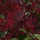 Nature's idea of what red should be by Rainydayphotos