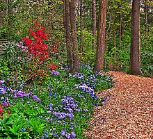 Flowery Path by James Brotherton