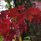 Autumn's annual fashion show by Rainydayphotos