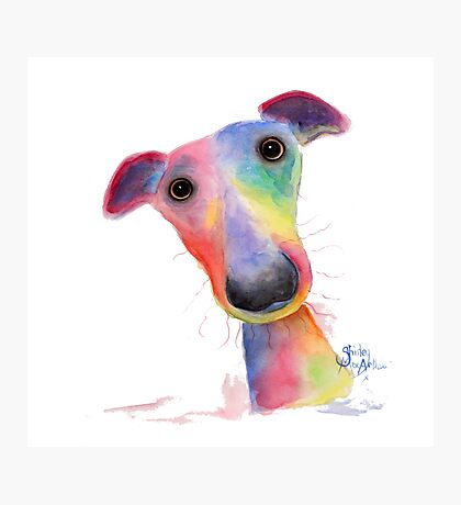NOSEY DOG 'HANK' BY SHIRLEY MACARTHUR Photographic Print