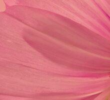 Pink Cosmo Petals Macro  by Sandra Foster