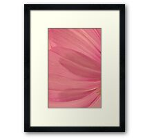 Pink Cosmo Petals Macro  Framed Print