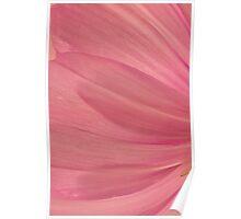 Pink Cosmo Petals Macro  Poster