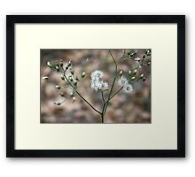 Pretty Weed Framed Print