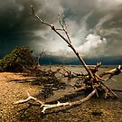 the storm by james smith